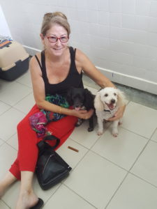 Pet relocation of Buddy and Holly from Indonesia